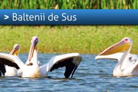 Banner-Baltenii-de-Sus