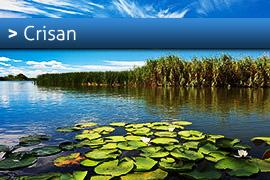 Banner-Crisan