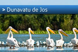 Banner-Dunavatu-de-Jos