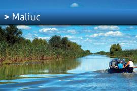 Banner-Maliuc