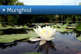 Banner-Murighiol